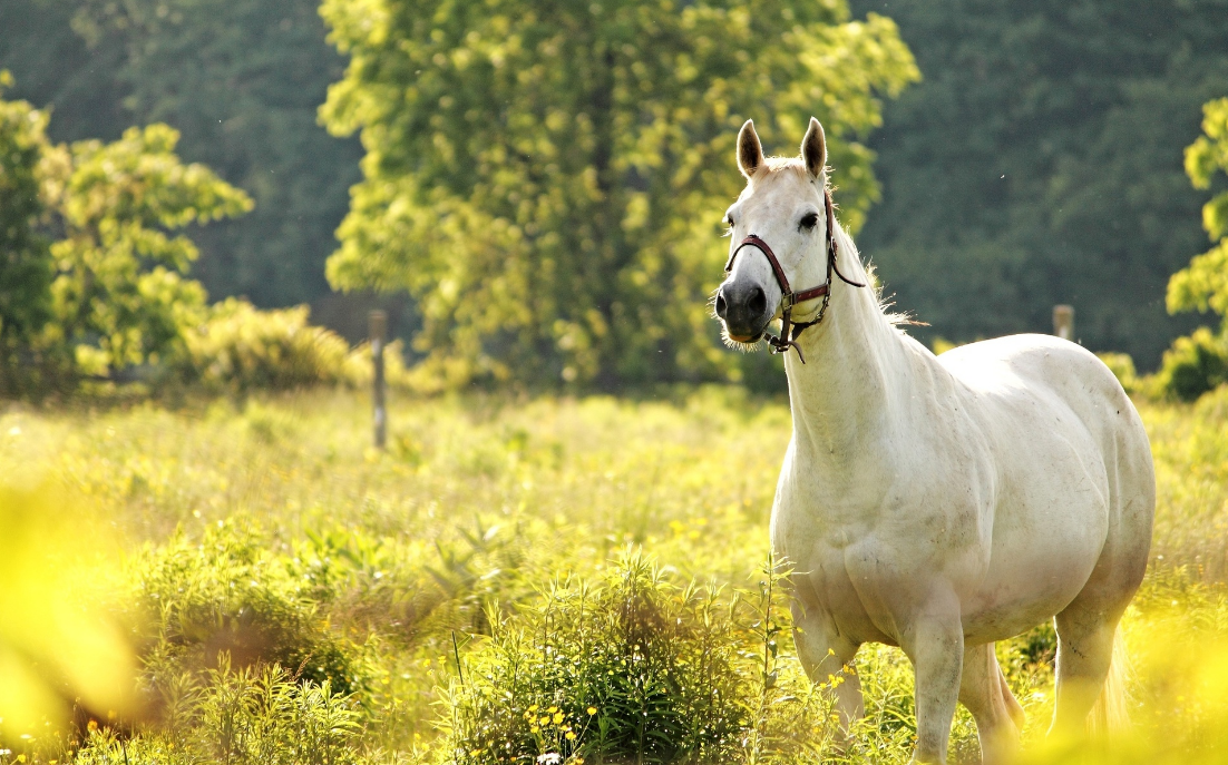 9 Beautiful Horse Hd Wallpapers Fashiongetup Com