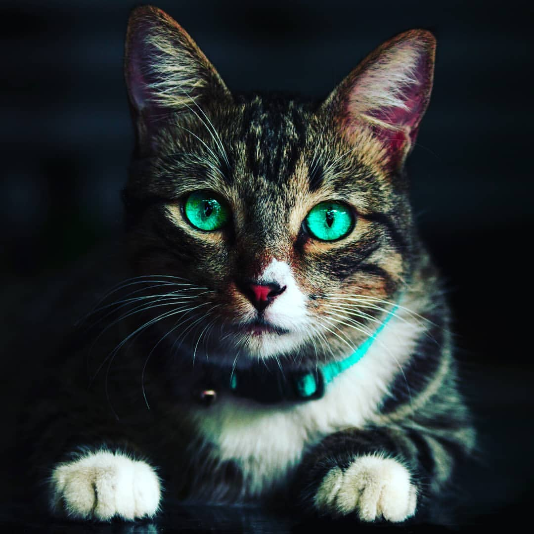 Cute Cats Hd Wallpapers Free Download