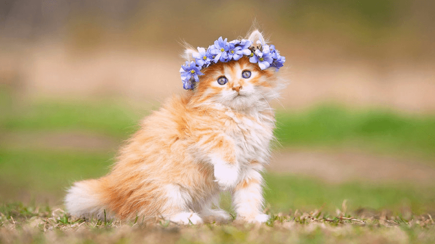 Stunning cat wallpapers
